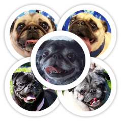Betty, Babee Waddington & Mr. Pugglesworth, Miko & Yoshi were adopted!