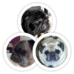 Pugsley, Sara & Mikie were adopted!