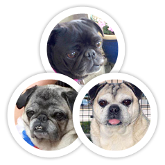 Miss Bella, Herby, and Pookie were adopted!