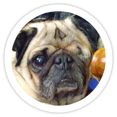 Pugsley was adopted!