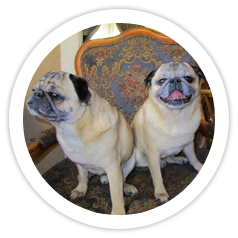 Peanut & Goober were adopted together!